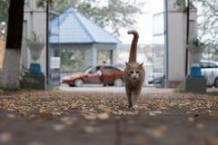 Gato hermoso del jengibre en el parque Imagen de archivo libre de regalías
