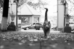 Gato hermoso del jengibre en el parque Fotografía de archivo