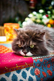 Gato hermoso del perser con los ojos verdes en el jardín en una tabla colorida Imagen de archivo
