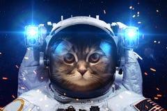 Gato hermoso en espacio exterior Foto de archivo libre de regalías
