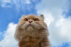 Gato hermoso en un cielo azul Fotos de archivo