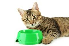 Gato hermoso que come, en el fondo blanco Fotos de archivo