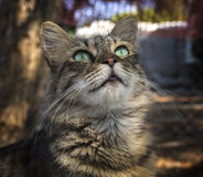 Gato hermoso que mira para arriba Foto de archivo