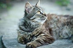 Gato hermoso que mira para arriba Imagen de archivo