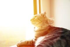 Gato hermoso que se sienta en la ventana Foto de archivo