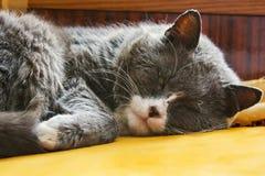 Gato hermoso suavemente dormido en el sofá Foto abstracta Primer del gato imagenes de archivo