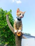 Gato huérfano del bebé Foto de archivo libre de regalías