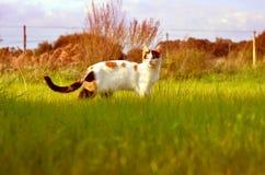 Gato II fotos de archivo