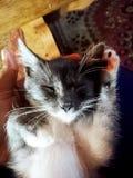 Gato inchado fotografia de stock