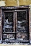 Gato inclinable imagen de archivo
