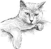 Gato indolente Fotografía de archivo