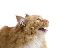 Gato infeliz Imágenes de archivo libres de regalías
