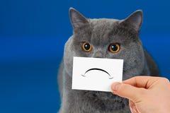 Gato infeliz o triste divertido Imagen de archivo libre de regalías