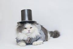Gato inteligente Foto de archivo libre de regalías