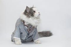 Gato inteligente Fotografía de archivo