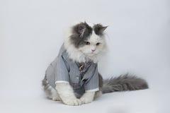 Gato inteligente Imagen de archivo libre de regalías
