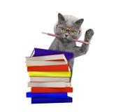 Gato inteligente com os livros isolados no branco Foto de Stock Royalty Free
