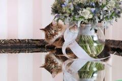 Gato interesado con las flores imagen de archivo libre de regalías