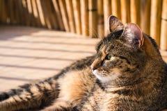Gato interessado em algo no assoalho O gato viu algo Imagens de Stock Royalty Free