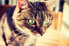 Gato interessado em algo no assoalho O gato viu algo Vinheta, foto do contraste alto Imagens de Stock