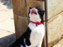 Gato ioning bonito decorado com joia grega no feriado Fotos de Stock