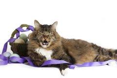 Gato irritadiço com cesta da Páscoa fotografia de stock