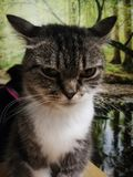 Gato irritado fotos de stock