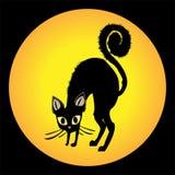 Gato irritado Imagens de Stock Royalty Free