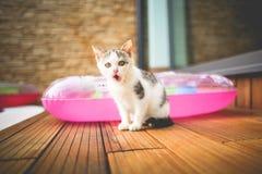 Gato irritado Fotografia de Stock