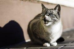 Gato irritado Foto de Stock