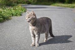 Gato irritado no parque em uma trilha Imagens de Stock Royalty Free