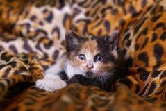 Gato joven imagen de archivo