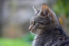 Gato joven Imagenes de archivo