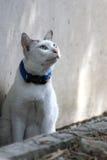 Gato joven blanco que mira algo ojo Foto de archivo libre de regalías