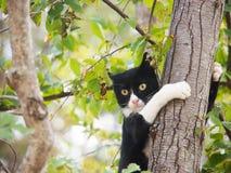 Gato joven, blanco y negro, (10) Foto de archivo libre de regalías