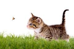 Gato joven con la mariquita en un campo verde Fotografía de archivo libre de regalías