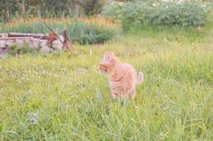 Gato joven con la mariquita en un campo verde Imagenes de archivo