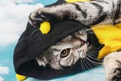 Gato joven en abeja del traje Imagen de archivo
