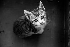 Gato joven en caja Imagenes de archivo