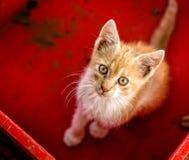 Gato joven en caja Fotografía de archivo libre de regalías