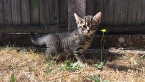 Gato joven en el jardín metrajes