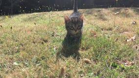 Gato joven en el jardín almacen de metraje de vídeo