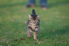 Gato joven en la corrida Foto de archivo