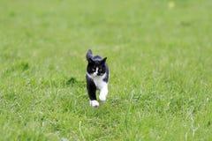 gato joven que corre en un prado jugoso verde fotografía de archivo