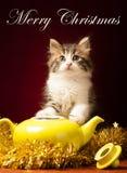 Gato joven que juega con los ornamentos de la Navidad Foto de archivo libre de regalías