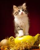 Gato joven que juega con los ornamentos de la Navidad Fotos de archivo libres de regalías