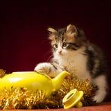 Gato joven que juega con los ornamentos de la Navidad Fotos de archivo