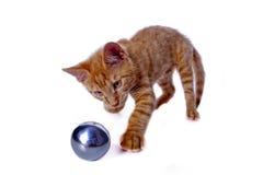 Gato joven que juega con una bola Fotografía de archivo libre de regalías
