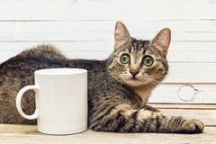 Gato joven que miente al lado de una taza del café con leche Fotos de archivo