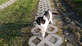 Gato joven que va a casa Foto de archivo